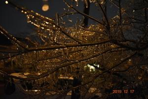 月夜に燐く凍り付いた樹氷