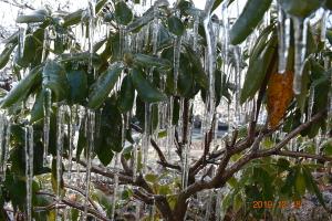 氷を纏った葉っぱ