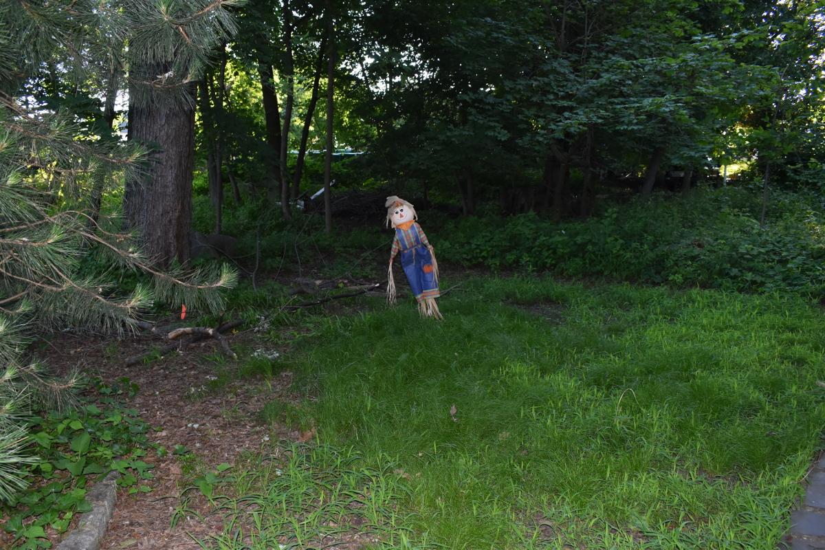 裏庭のテント設営予定地