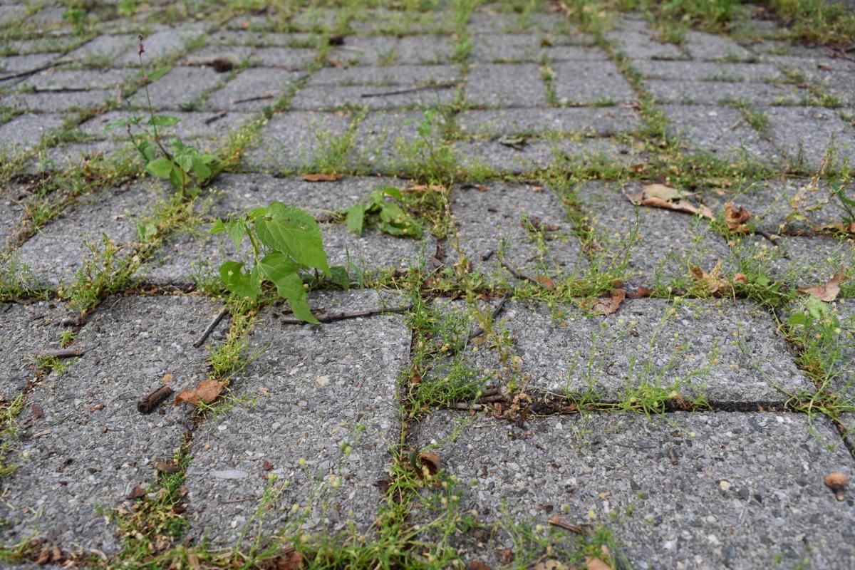 石畳の間に生えてきた雑草