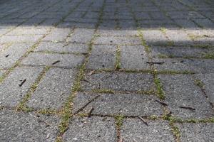 バスケットボールで削られて無くなった雑草