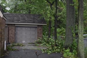 暴風雨で落ちた木の枝