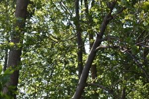 暴風雨の後で他の木に斜めに立て掛かっている木